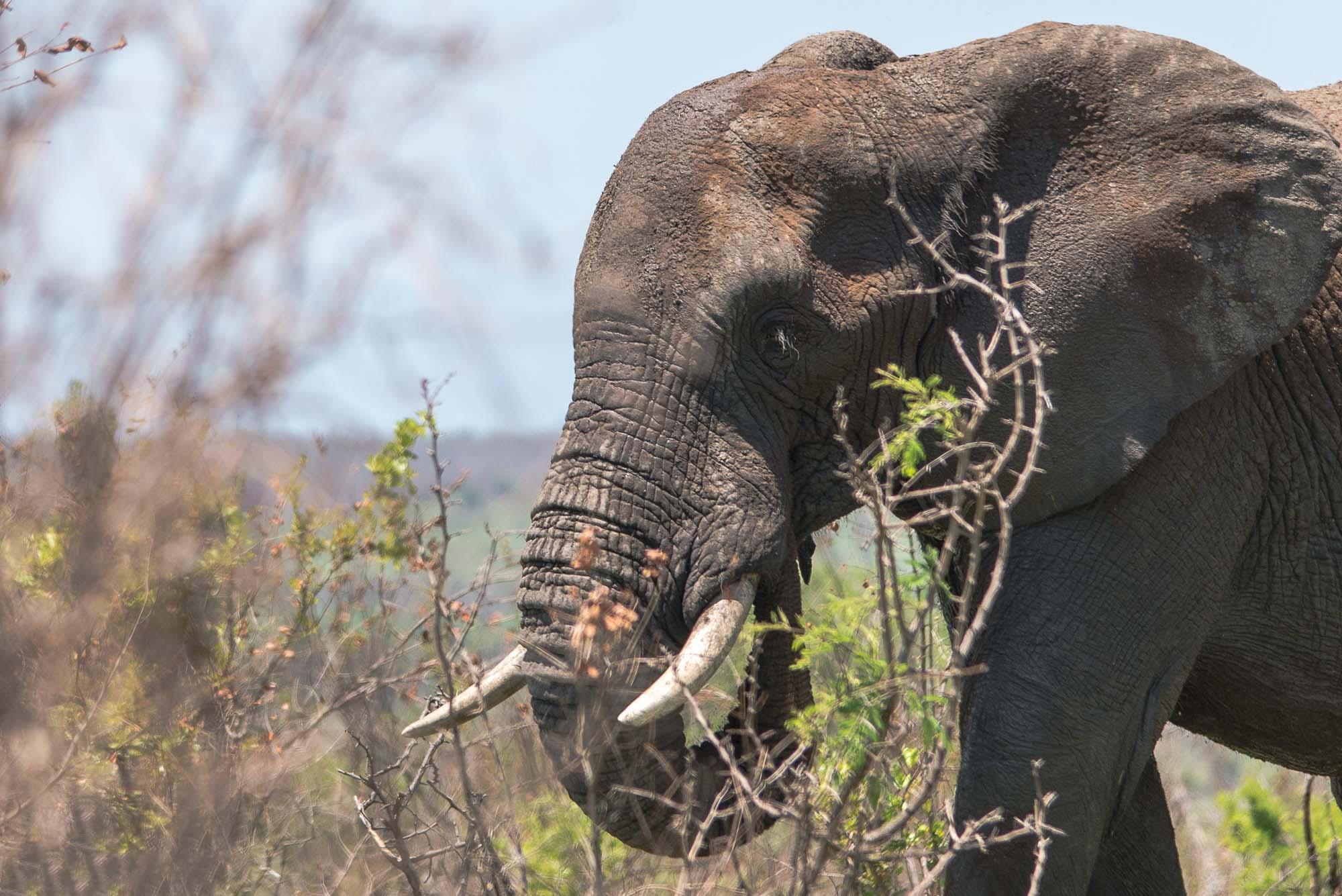 White Elephant Safari Lodge